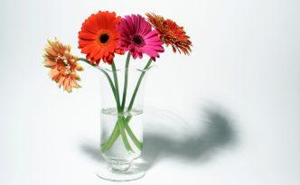 Ilustrasi Pot Bunga | Img:freeimages.com