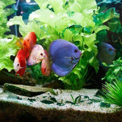 Panduan Cara Membuat Filter Kolam Ikan di Rumah