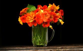 Ilustrasi Bunga Begonia   Img:freeimages.com