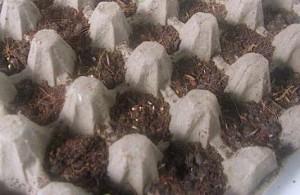Karton Bekas Telur untuk pot pembibitan