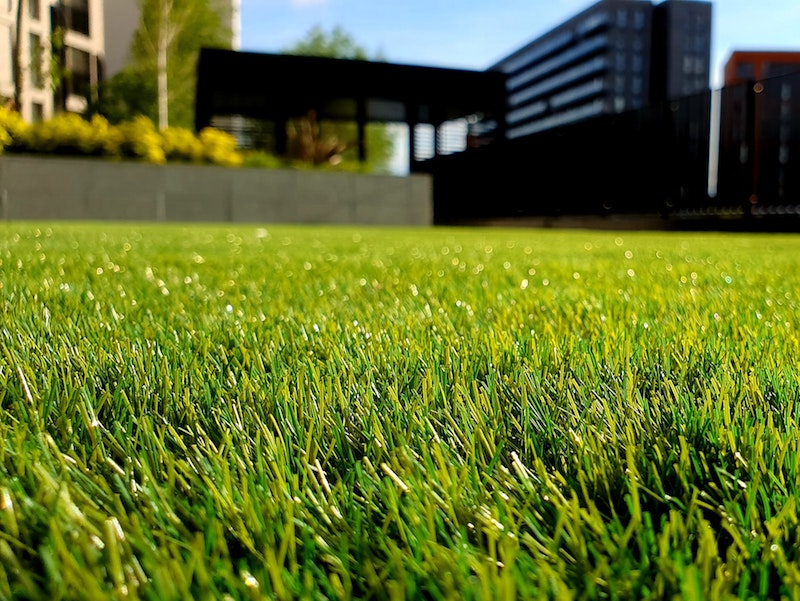 9 Jenis Rumput Taman Yang Indah dan Cara Perawatannya