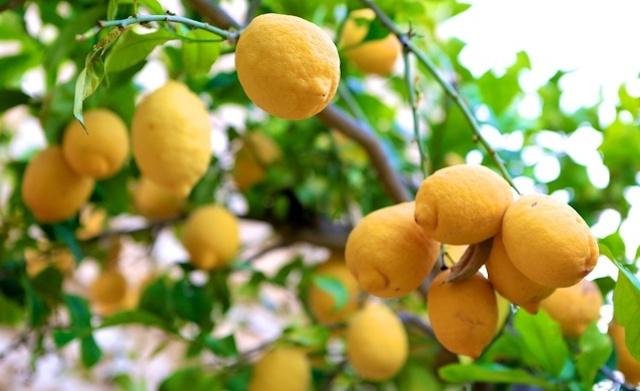 Manfaat Jeruk Lemon untuk Kecantikan