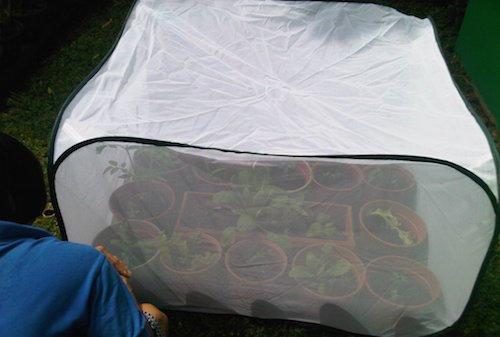 Berkebun Sayur di Lahan Sempit