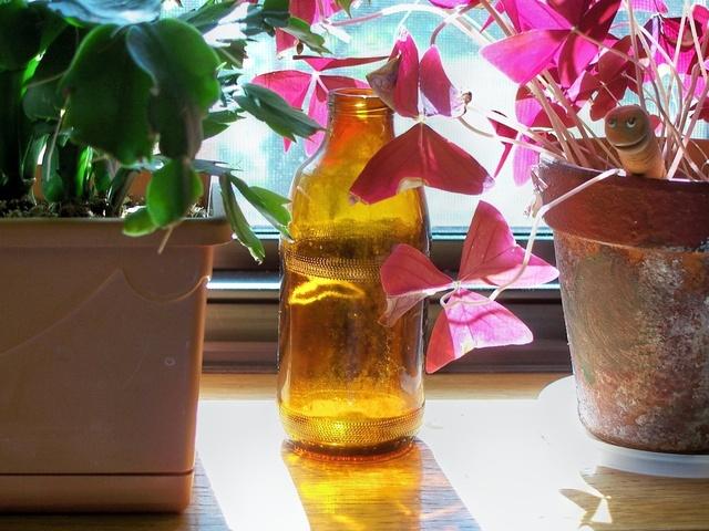 Ilustrasi Tanaman Pot | Img:freeimages.com